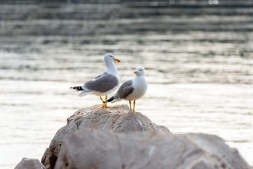 Two seagulls standing on rocks