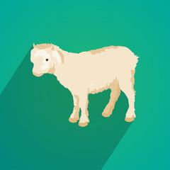 lamb flat design