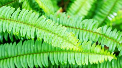Green fern leaf in a garden.