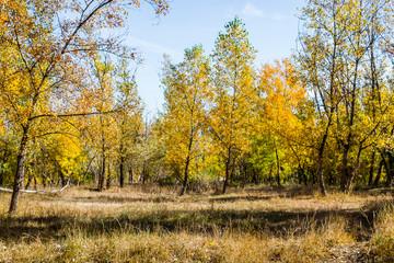 autumn fairy forest color