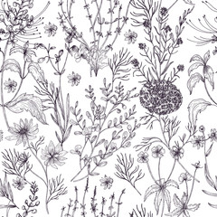 Antique floral seamless pattern with wild flowers, flowering herbs and herbaceous plants hand drawn in black and white colors with contour lines. Monochrome vector illustration in vintage style.