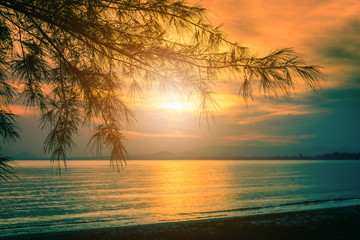 Wall Mural - Silhouette trees on beach at sunset. Vintage tone.