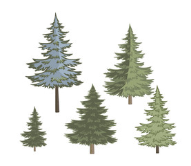 Five variants of Christmas tree on white background/Five variants of lush green pine trees