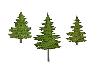 Three Christmas trees on a white background/Three variants of lush green pine trees
