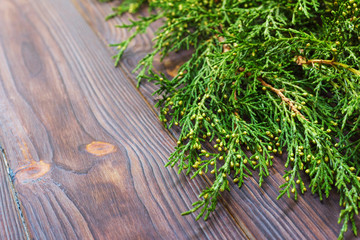 Green thuja branches on rustic wooden background