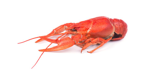 Fresh boiled red crayfish, isolated on white background.