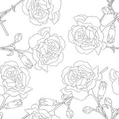 Carnation Flower on White Background