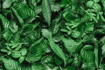 Creative layout made of green leaves. Flat lay. Nature background Wall mural