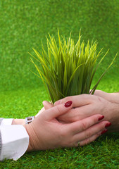 Two pairs of hands gently holding a young plant