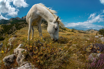 Beauty nature mountain landscape with white horse