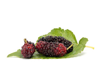 Group of mulberries with a leaves isolated on white background. Mulberry this a fruit and can be eaten