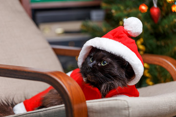 New Year's picture of black cat in Santa costume