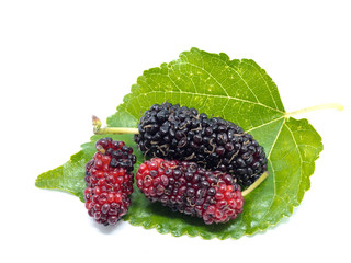 Group of mulberries with a leaves isolated on white background. Mulberry this a fruit and can be eaten.