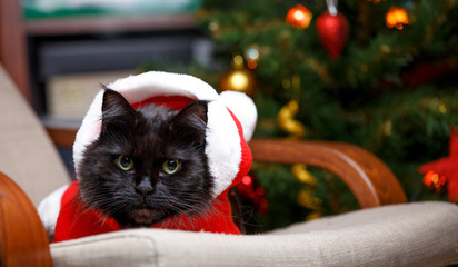 Photo of New Year's cat in Santa costume sitting at chair