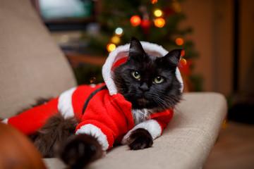 Photo of festive cat in Santa costume sitting in chair