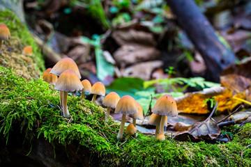 Mushrooms on the stream bank