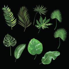 Set of leaves of tropical plants. Collection of exotic leaves. Colored Vector illustration.