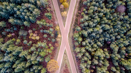 Drone view of a wood with crossroads and colorful trees