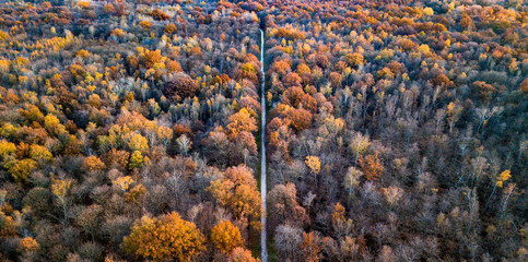 Drone view of a forest with colorful trees and a path crossing the wood
