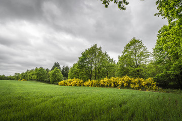 Cloudy weather over a rural field with broom