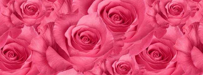 bedek mooie roze roos