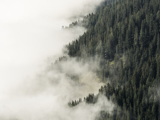 Fog covered forest mountain side, half clouds, half trees, alps, Southtirol, Italy