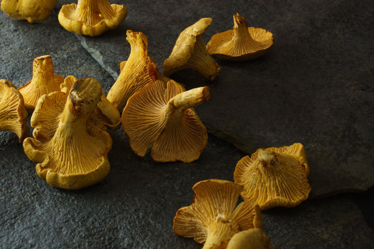 Chanterelles on dark slate with room for copy