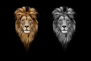 Portrait of a Beautiful lion, lion in dark. Portrait of a leader. king