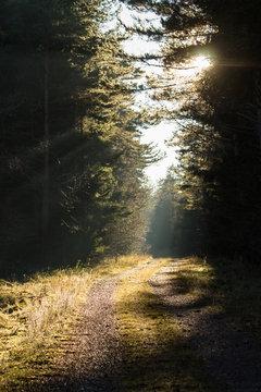 Waldweg im Schwarzwald