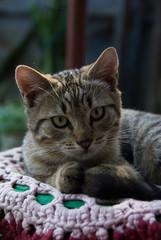 Beautiful cat close up