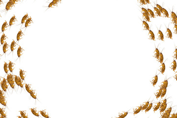 Collage of dead cockroaches in circular pattern on white background copy space