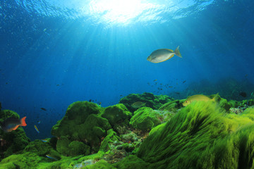 Underwater. Green algae and blue water with fish