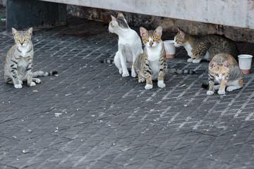 Five homeless cats