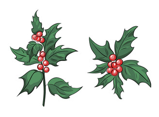 Holly branch with beries, ilex vector hand drawn illustration fit for Christmas and New Year design, celebration symbol
