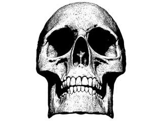 Skull illustration isolated in black background