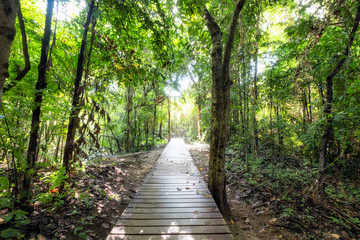Wooden walkway on tropical rainforest