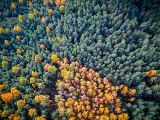 Nature, Amazing Aerial View of Colorful Field of Trees During Fall Foliage, Autumn Wallpaper