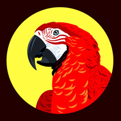 Portrait of a macaw parrot