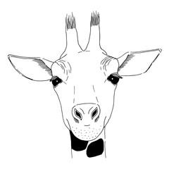Vector graphic sketch of giraffe
