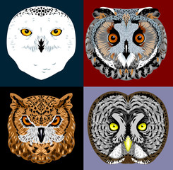 a set of owl images