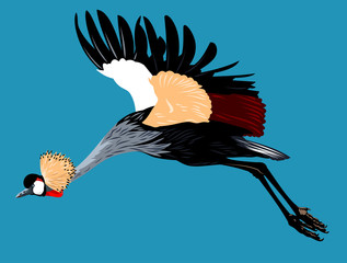 Picture of the Crowned Crane