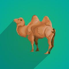 camel flat design
