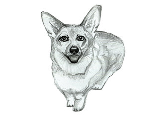 Dog  on an isolated background. Hand drawn sketch