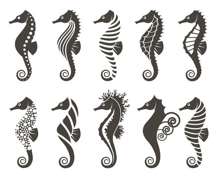 collection of seahorse on isolated white background