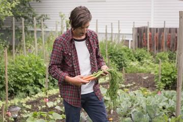 Man holding organic carrots in a garden