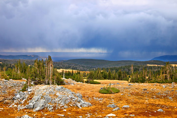 Wall Mural - National Forest Storms Wyoming