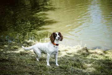 Cute dog with an orange collar