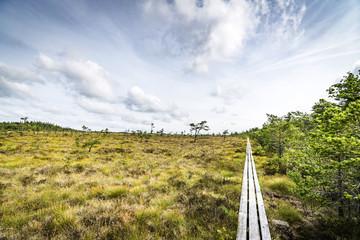 Wilderness landscape in the summer