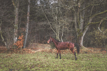Brown horse on a rural meadow in the fall