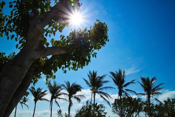 Beautiful sunbeams extend through tropical trees on beachfront of Florida Keys during daytime.